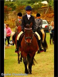 Bonnie 14.1hh - 14 year old bay mare http://www.lardidar.co.uk/Horse/14-year-old-bay-mare-listing-128.aspx#.Uj2M9VOAUfQ