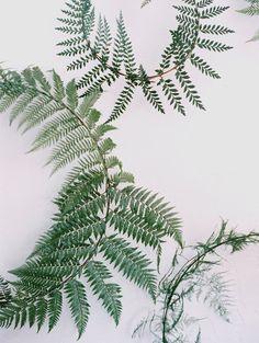 Fern Wreath, delicate pattern, evokes tranquility & peace