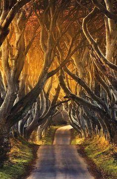 Tree tunnel 6