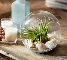 Live Tabletop Airplant Garden | Pottery Barn