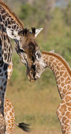 Best for Communing with Nature Winner: Belmond Safaris in Botswana. #JetsetterAwards
