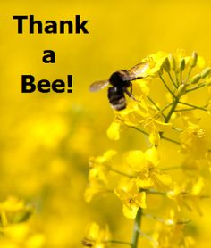 """Bees.... Love them or hate them, they are very important for the global food supply.   Click """"Like"""" to thank a bee!"""