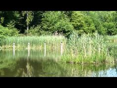 Eisweiher in Aadorf - YouTube 62km Fantasy Series, My World, Scenery, Country Roads, Journey, River, Places, Youtube, Outdoor