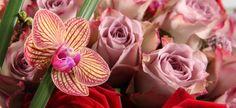 Ruusuinen kimppu orkidealla Rose, Flowers, Plants, Pink, Florals, Roses, Planters, Flower, Blossoms