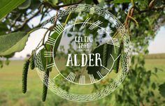 Journey to meet the Alder Tree Spirit and hear what it has to tell you from the Otherworld.  Blog post series on the Celtic Tree Calendar.