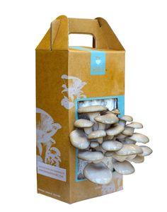 A mushroom kit!  You can grow these in your own kitchen. Sweet!