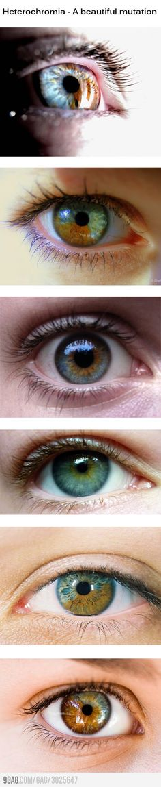 3rd from the bottom are like mine, only the blue part is more greenish-grey; I'd always wondered what it was called.