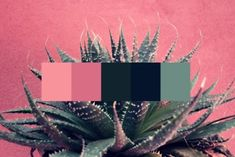 olivia ~ original color palettes by yours truly ~ i take submissions & requests ! ~ check out my faq...