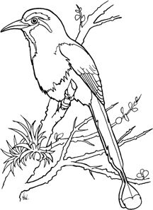 outline drawings of nature google search