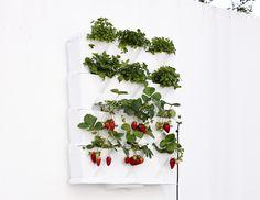 #design3000 Drei Module Für Einen Minigarten Mit Neun Pflanzen.  #verticalgarden