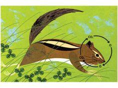 Charley Harper Squirrel
