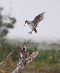 SOS Save our Shorebirds PETITION - Care2 News Network