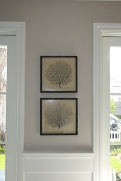 Sea fan art for beach house-----  I like in Reclaimed wood rustic frame.