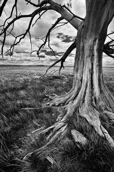 """""""Wicked Tree..."""" by Jeremy Cram, via 500px."""