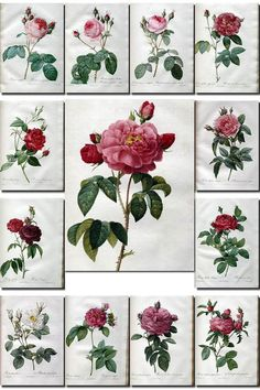 ROSES-3 Collection of 165 beautiful vintage by ArtVintage1800s