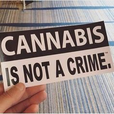#cannabis #ganja #smokeit  #high #highaf #gethigh #stoned #getstoned #smokeweed#stonedaf #blunts #bongs #joints #blazed #nug #roll #weedporn #weedpics #legalizeit #legalizemarijuana #420 #420life #hightime #sohigh #thc #weedlife #weedlove #weedporn