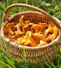 Wild Chanterelle Mushroom Hunting Trip - How To Edible Mushrooms, Stuffed Mushrooms, Risotto, Mushroom Hunting, Apple Pie, Britain, Vegetables, Ethnic Recipes, Food