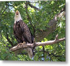 Ackley Iowa Eagle Metal Print by Bonfire #Photography