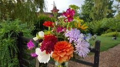 August flowers growing, all from seed, all on our flower farm.
