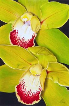 Green Orchids by Gary Greene. Colored pencils.
