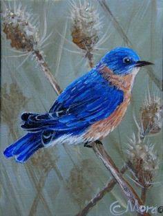 $100 Blue #Bird Limited Edition Peel and Stick Fine #Art Wild Bluebird