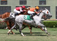With a late charge Drinking Fund and  jockey Chris Rosier aboard captures the 34th running of the Honeymoon Stakes over the turf course at Louisiana Downs.