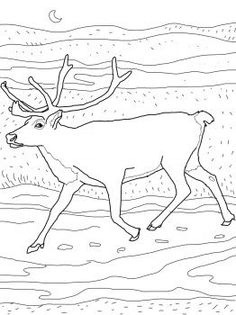 Caribou coloring page from Reindeer category. Select from 31983 printable crafts of cartoons, nature, animals, Bible and many more. Printable Crafts, Printables, Craft Stick Crafts, Crafts For Kids, Craft Ideas, Reindeer Craft, Arctic Animals, Free Printable Coloring Pages, Paper Dolls