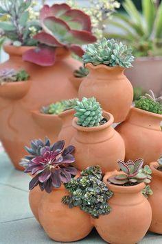 Semperveriums in terra cotta pots