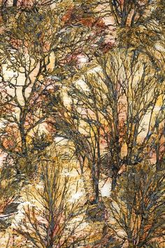 Lesley Richmond textiles, inspired by trees and the countryside- love it Textile Fiber Art, Textile Artists, Water Soluble Fabric, A Level Textiles, Nature Artists, Thread Painting, Tree Art, Medium Art, Fabric Art