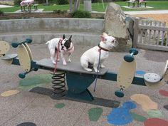 French Bulldogs partaking in Playground Shenanigans!