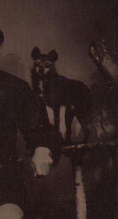 Dull Tool Dim Bulb: Tintype Dog with Considerable Eyebrows Tintype Photograph collection Jim Linderman