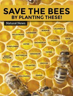 #beekeepingideas