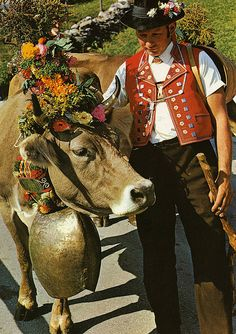 Switzerland - The Almabtrieb is an annual event that takes place each autumn between end of august maybe untill end of October, depending on the weather situation and the hight of the alpine meadows, where the cows spent their summer. The animals are decorated and paraded into town for Winter where festivities start to celebrate and honor the loyal animals. Every year this event are advertised and announced in most of the villages in the Swiss, German and Austrian Alps.