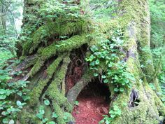 hollowed out tree covered with moss and ivy....