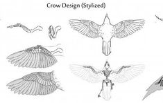 Image result for crow anatomy