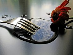 5 Superb Examples of Still Life Photography