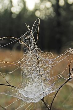 'Webbing' by Donald Sewell on Capture Inland Northwest // Morning Dew outlines an intricate network of Spider Webbing in Lincoln County, WA. Print ID Morning Dew, Outlines, North West, Lincoln, Spider, Thankful, Spiders