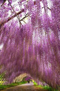 brentwood angel tree