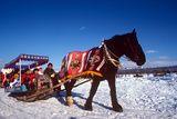 Children Enjoying Horse  &  Sleigh Ride  Winter Festival  Sapporo  Japan