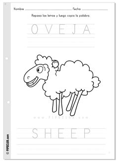 Coloring activity by @evapipo: oveja / sheep