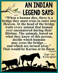 Legend says . Native American Spirituality, Native American Wisdom, Native American Legends, American Indians, American History, Dog Quotes, Animal Quotes, Life Quotes, American Indian Quotes