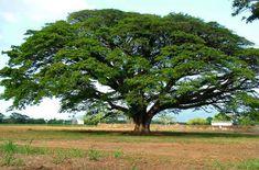 6 Filosofi Pohon Beringin Biar Jadi Pribadi yang Lebih Tangguh | Pinterest | Tegg Sabrina | #berita #news #informasi #portalberita #malesnulis