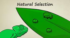 Blog post with ideas about how to teach natural selection