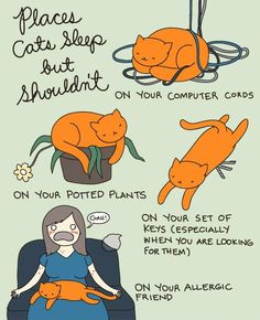 Places cats sleep but shouldn't.