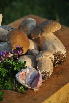 Know Your Boletes (Great post from HuntGatherCook, on the Cep and several other bolete mushrooms. Gorgeous photos)