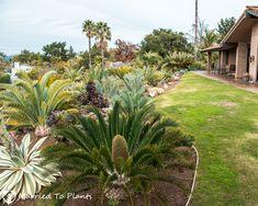Those plants were all from the exceptional garden of Bob De Jong. Tropical Garden Design, Exotic Plants, Drought Tolerant, Dream Garden, Palm, Bob, Africa, Gardening, Tours