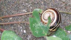 Snail . . .