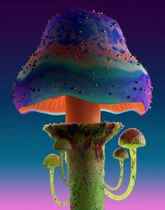 Mushroom Images, Mushroom Pictures, Mushroom Art, Mushroom Fungi, Trippy Mushrooms, Wild Mushrooms, Stuffed Mushrooms, Mushroom Wallpaper, Poisonous Mushrooms