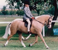 Section B Welsh Pony