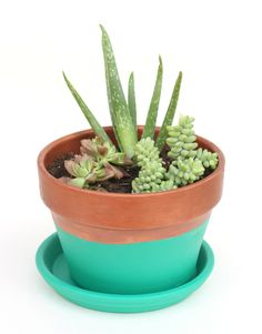 Mother's Day DIY Gift Ideas: 10 Inspiring Succulent & Cactus Gardens  w/matte black paint instead